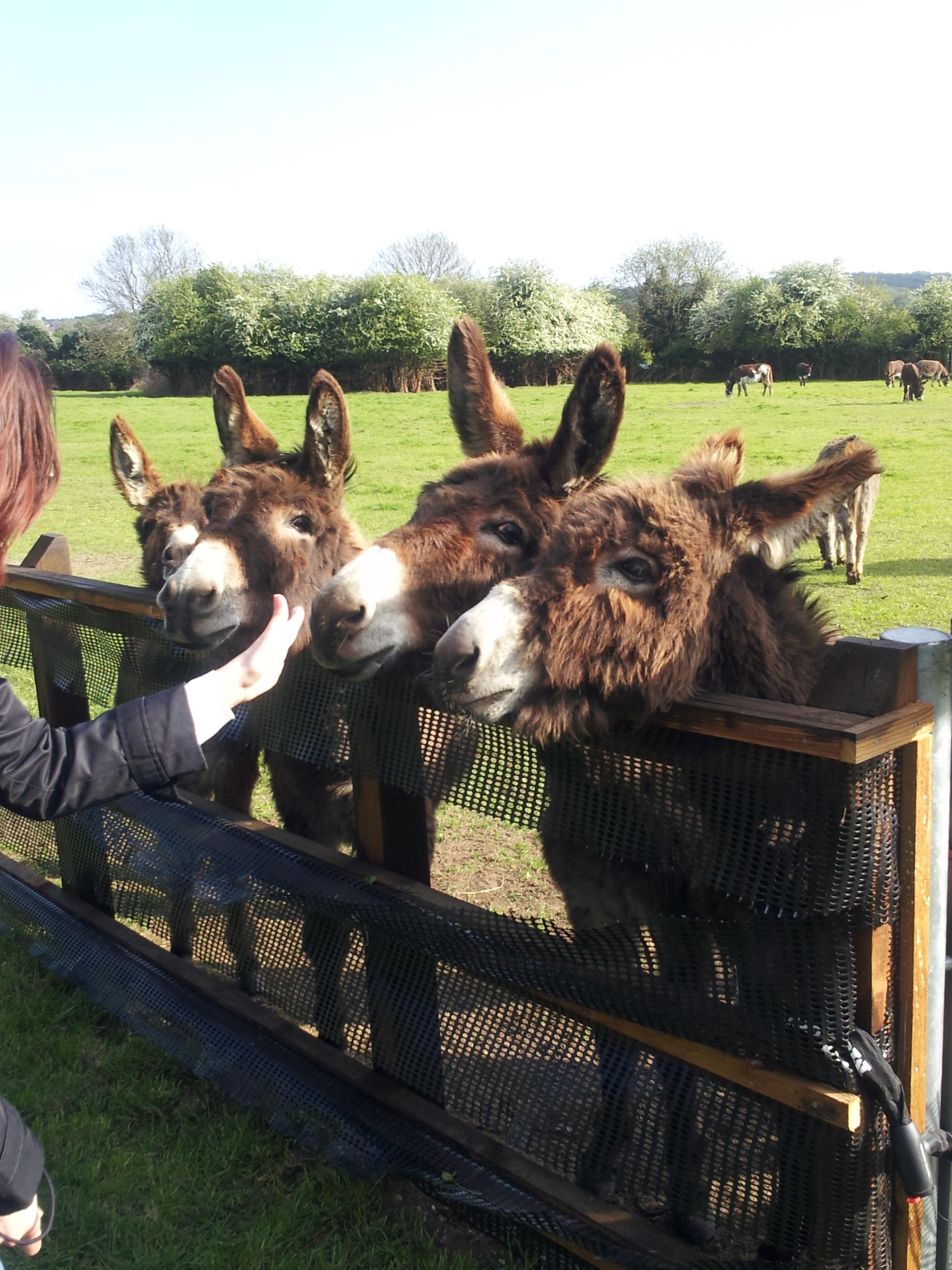 Walking London - Donkeys Farm