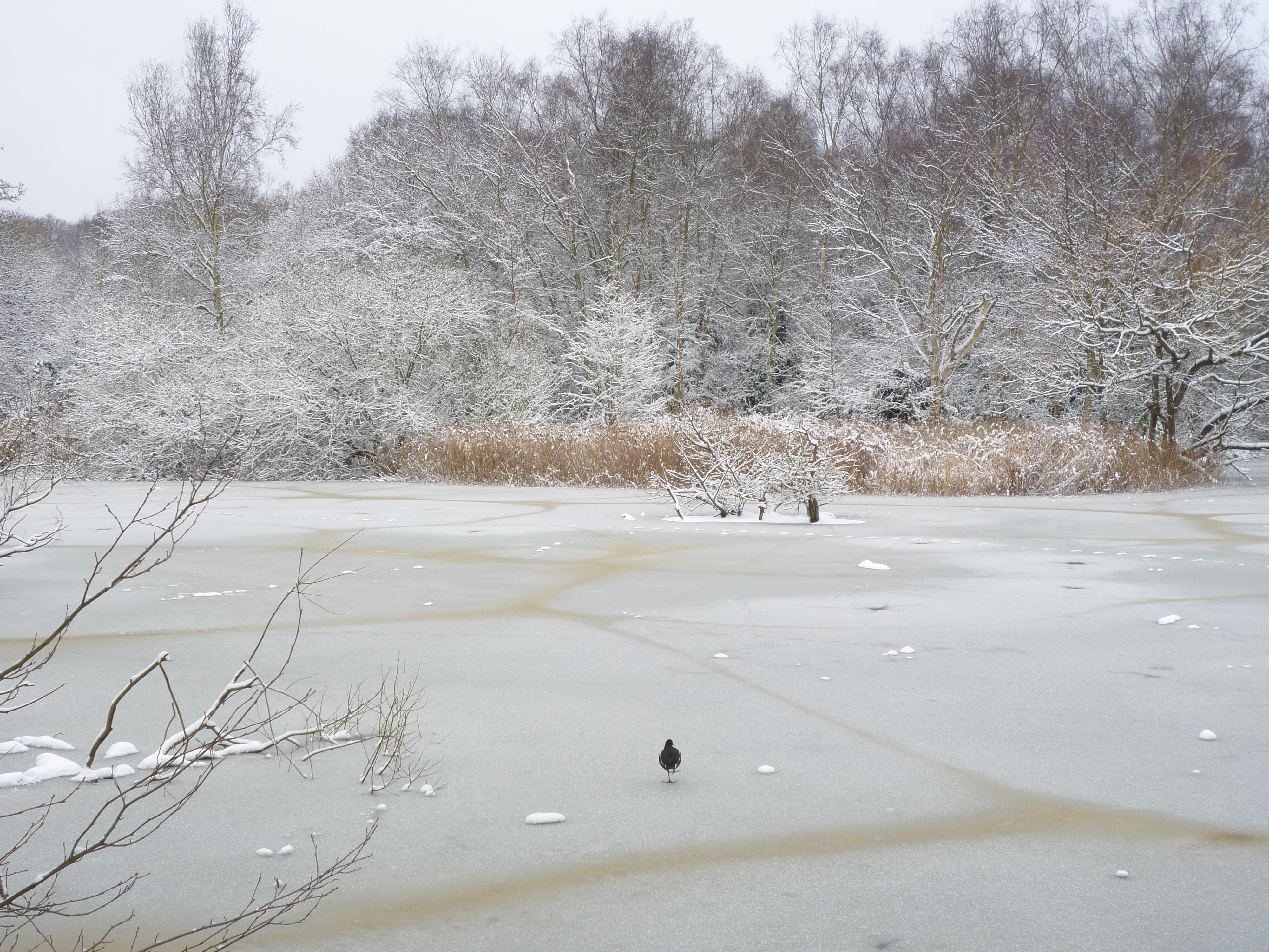 Snowy London - Hampstead Heath6
