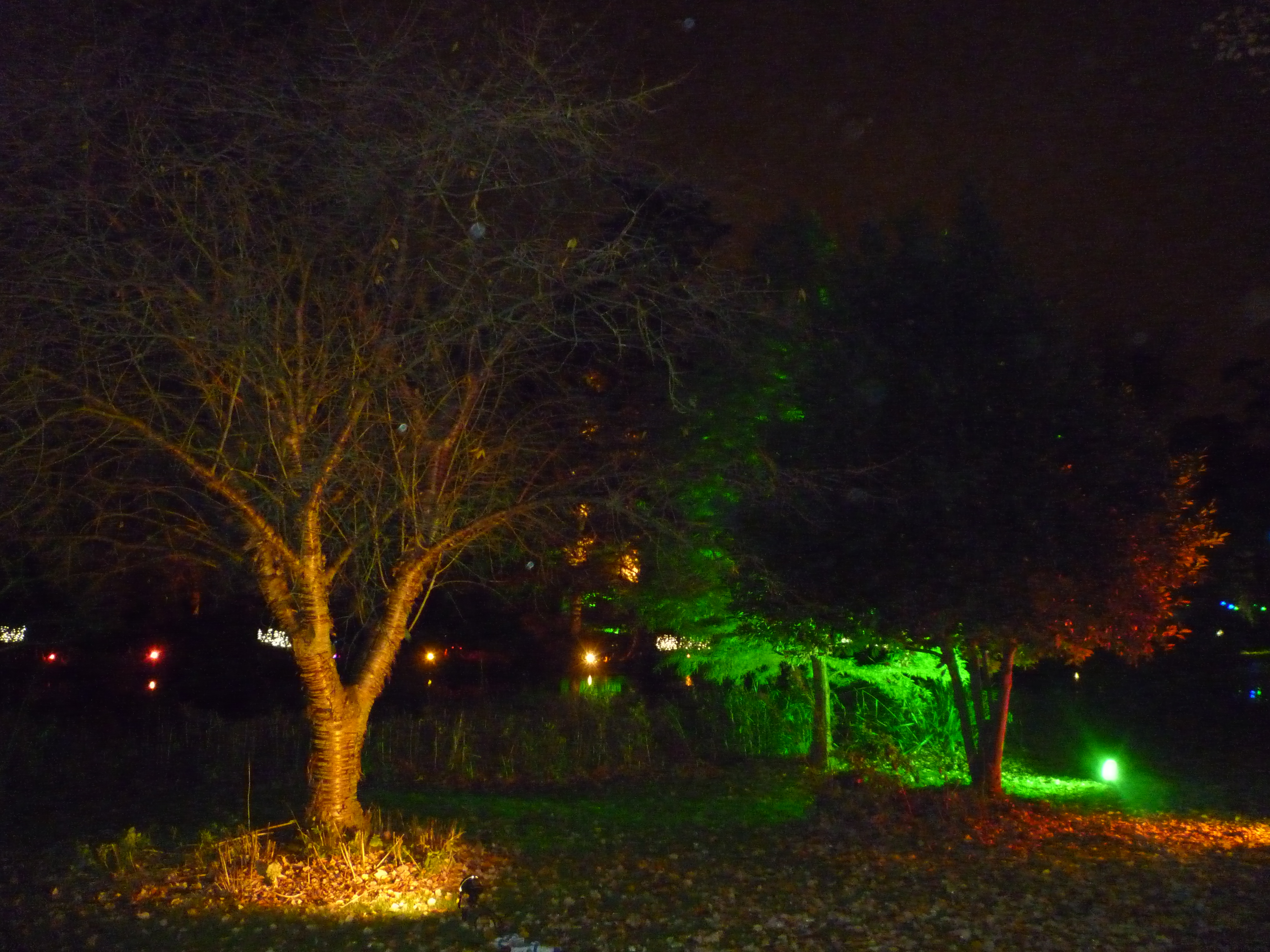 A Walk through an Enchanted Woodland - perspectives