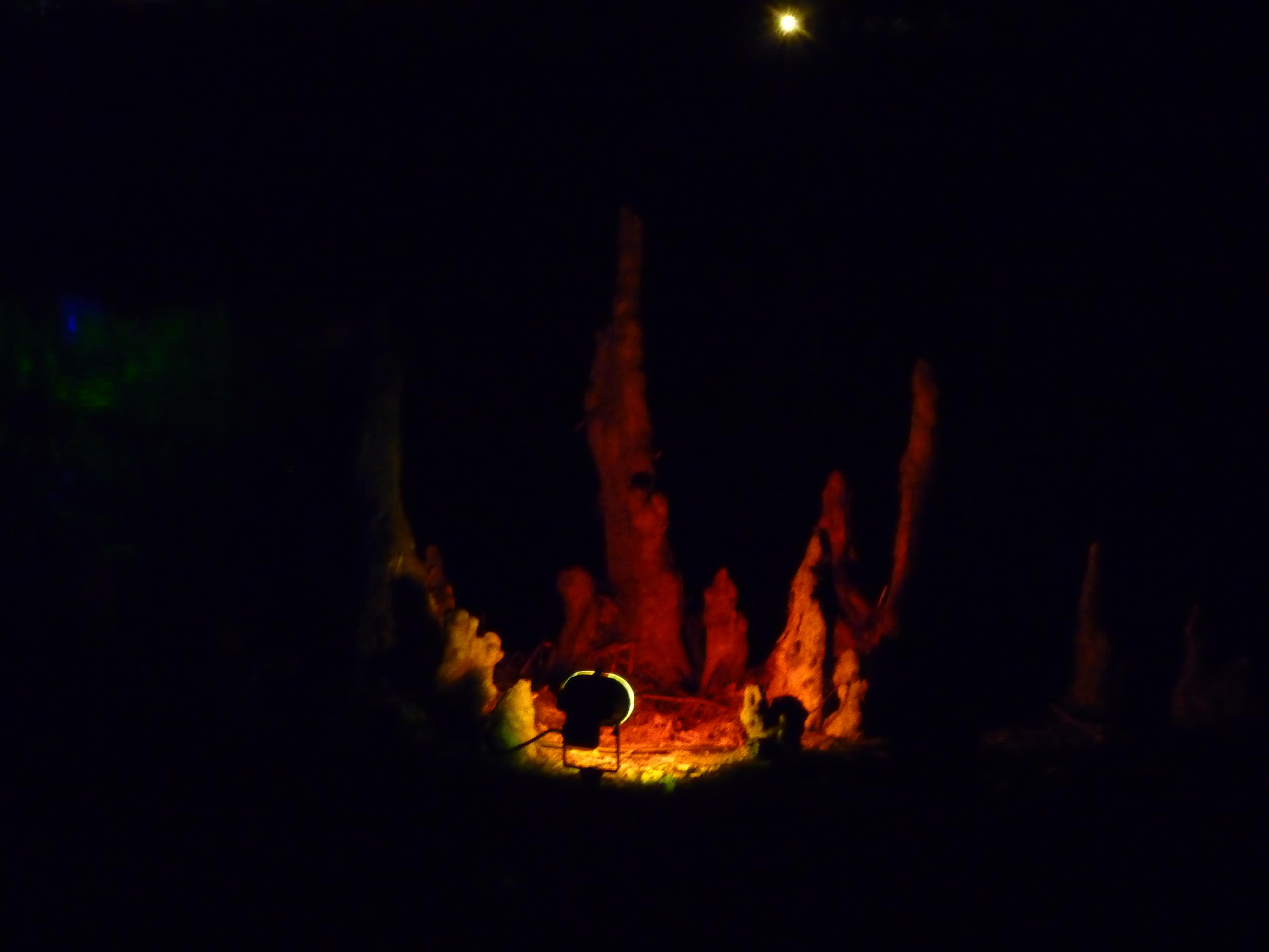A Walk through an Enchanted Woodland - fire! 1